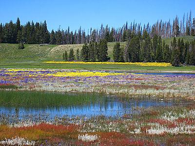 Yellowstone Canyon115