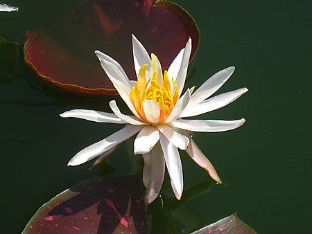 Botanical Garden008