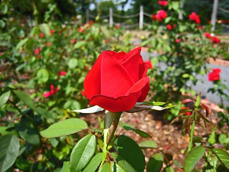 Botanical Garden009