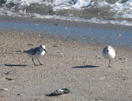 Beach Scenes011