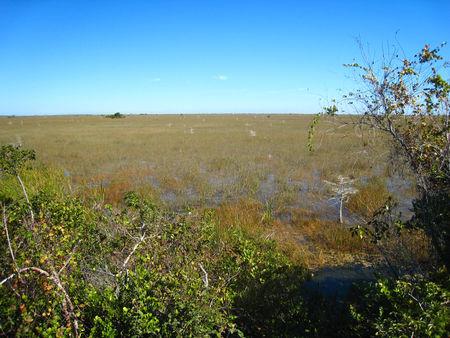 Everglades040