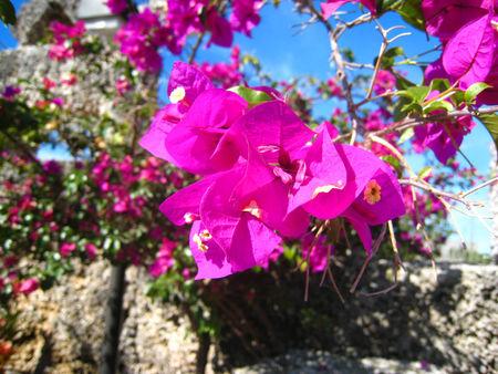 Coral Castle015