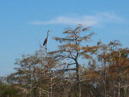 Everglades018