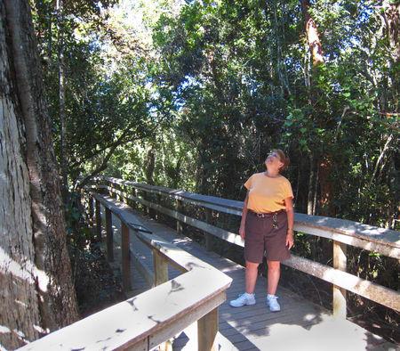 Everglades042
