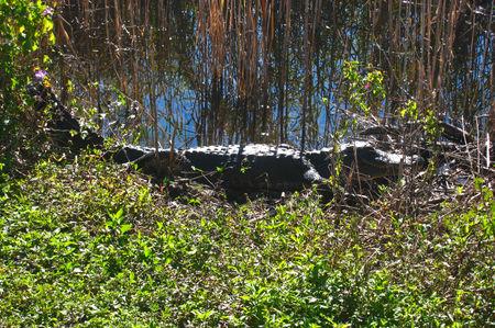 Everglades013
