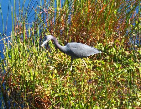 Everglades031