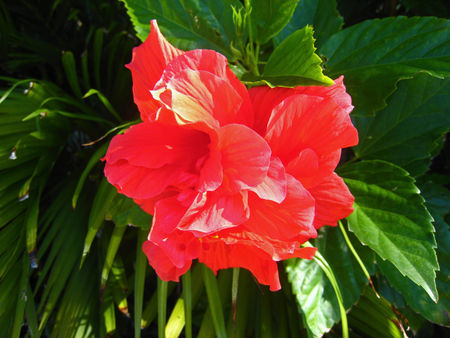 Sunken Gardens019