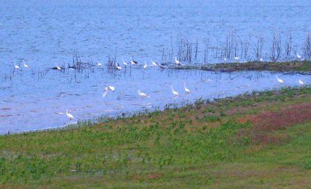 Lewisville Lake006