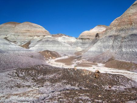 Petrified Forest100