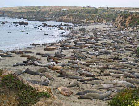 Seals015