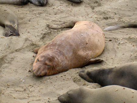 Seals016