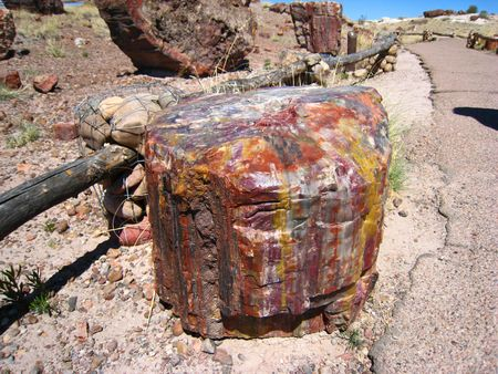 Petrified Forest008