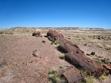 Petrified Forest012