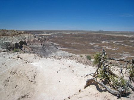 Petrified Forest083