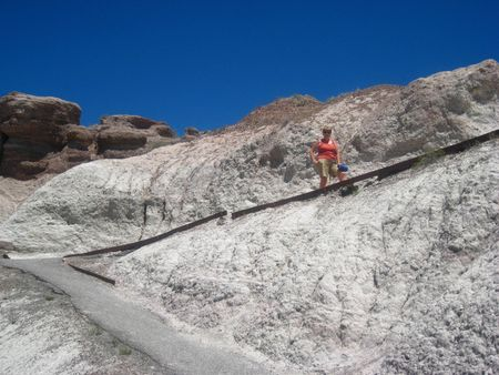 Petrified Forest101