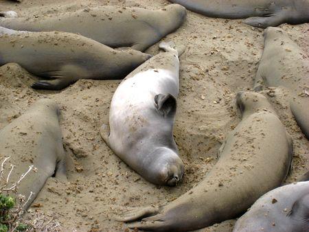Seals017