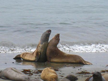 Seals022
