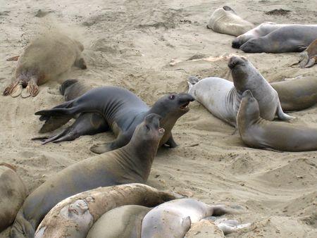 Seals027