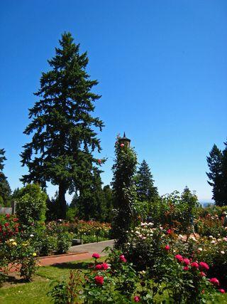 Port Rose Garden044
