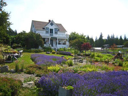 Cedarbrook Lavender066