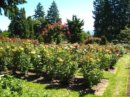 Port Rose Garden041