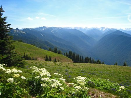 Hurricane Ridge022