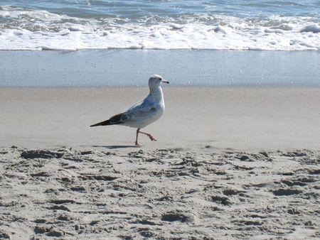 Myrtle Beach-Beach_0010