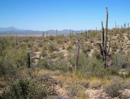 Desert Museum_0025