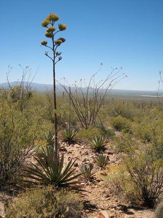 Desert Museum_0029