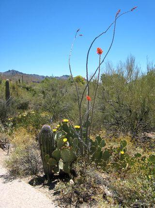 Desert Museum_0035