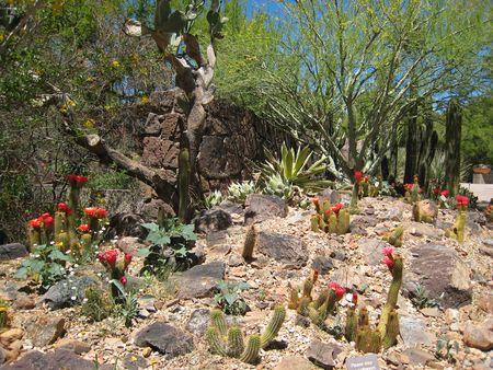Desert Museum_0055