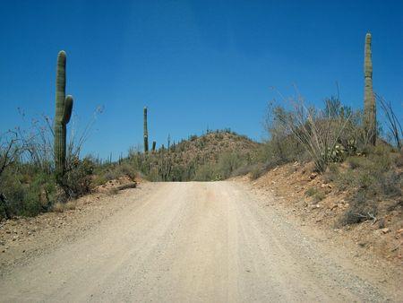 Saguaro NP_0070