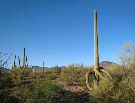 Desert Trails RV_0006
