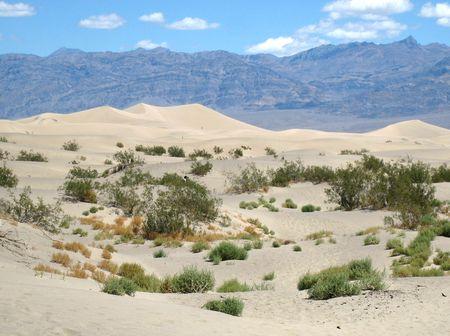 Mesquite Dunes_0029