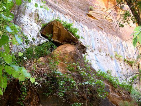 Zion Canyon_0027