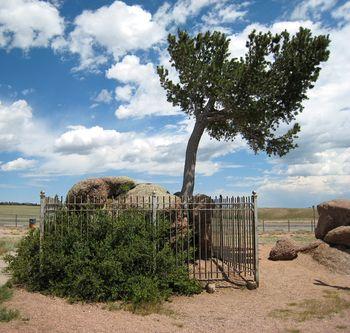 Tree Rock_0026