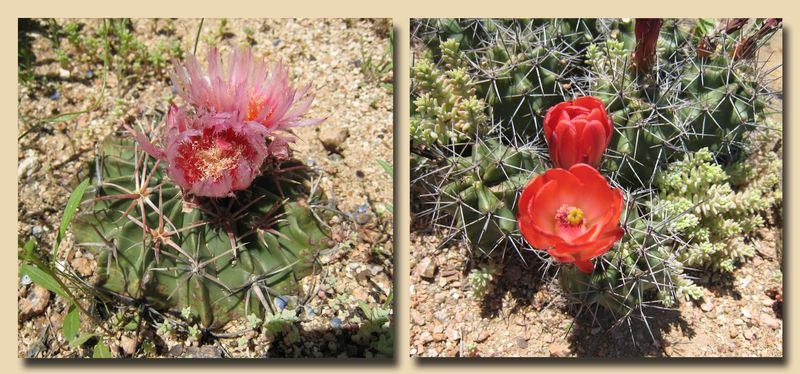 Cactus Composite