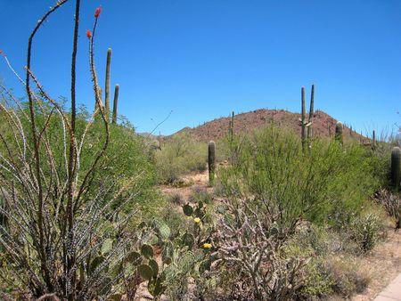Saguaro NP_0064