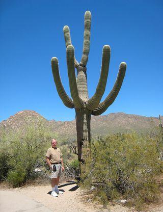 Saguaro NP_0065
