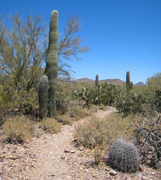 Tucson Mt Park_0006