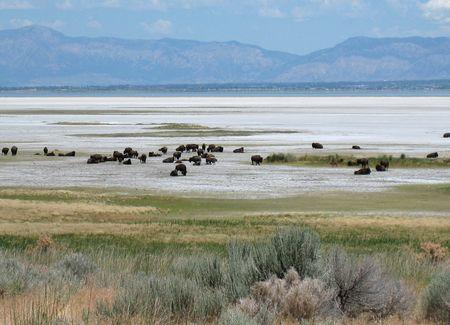 Antelope Island_0047