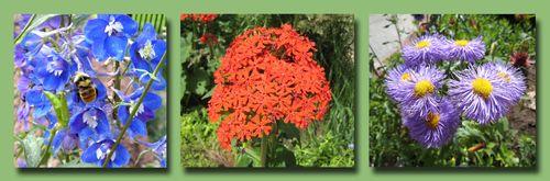 Botanic Garden Composite