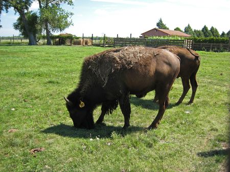 Buffalo Bill Ranch_0041