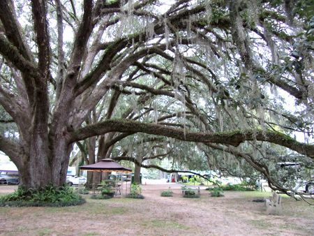 Big Oak RV_0001