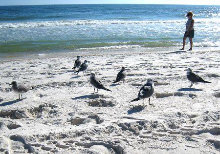 Gulf Shores Beach M_0028