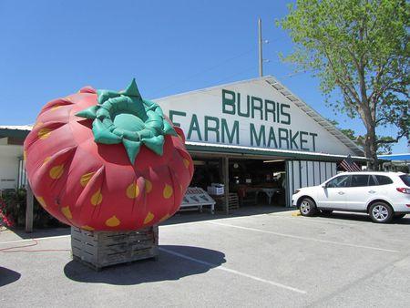 Burris Farm Market_0001