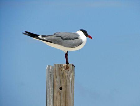 Gulf Beaches_0003