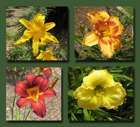 Botanical Garden Composite 2