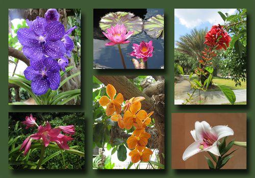 Botanical Garden Composite 1