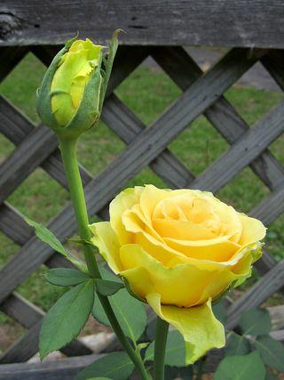 Rose Garden_0034